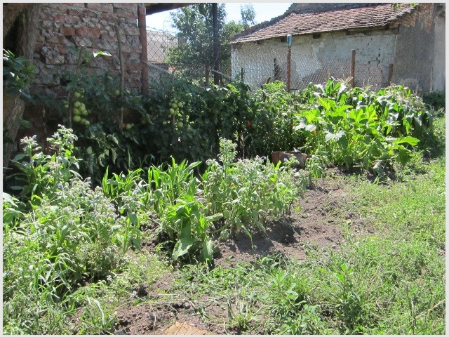 Po prvej jarnej úrode začali do záhrady pribúdať bylinky
