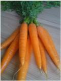 Pečieme s mrkvou