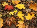 Jesenné dopoludnie na Železnej studničke