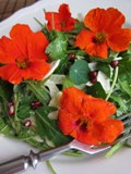Jedlé kvety
