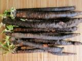 Čierny koreň - výzva záhradníka