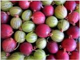 Egreše, nenápadné letné ovocie